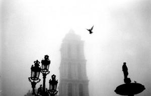 空を飛ぶ鳩