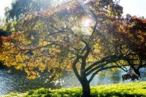 湖畔に立つ紅葉の綺麗な木