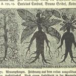 マンドラゴラ風の人の形をした根っこを持つ植物が描かれた西洋の新聞
