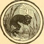 水草の中で浮いているカエルギリの横向きの絵