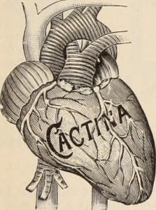心臓の絵『CACTINA』と書かれている