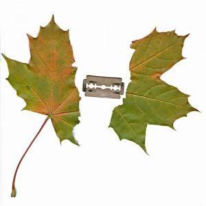 半分になったもみじの葉とその真ん中にカミソリの刃
