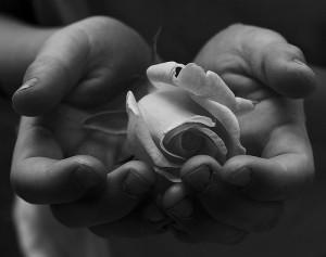 両手ですくうように薔薇の花を持つ白黒写真