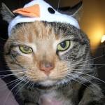 鳥の顔が描かれた帽子を被らされた猫