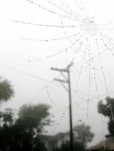 雨の雫が蜘蛛の巣についた白黒写真