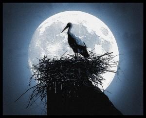 月をバックに巣の上にいるツル
