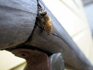 服の上に蜂が止まっている