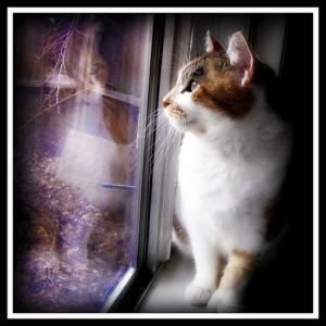 ガラスに映るネコと猫