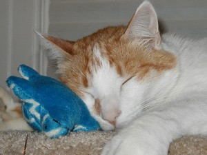 亀のぬいぐるみを枕にして寝る猫
