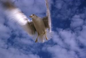 空を飛ぶ海鳥